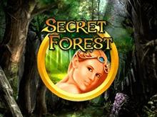Аппарат Secret Forest в клубе Вулкан