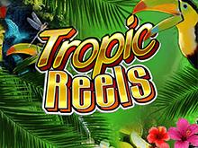 Виртуальный автомат Тропические Барабаны в казино